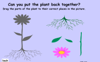 plants10